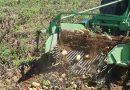 Το Υπουργείο Αγροτικής Ανάπτυξης έχει ξεκινήσει εντατικούς ελέγχους για να περιορίσει τις εισαγωγές εισαγόμενης πατάτας