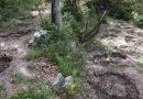 Εντόπισαν «ορφανή» φυτεία με 30 χασισόδεντρα