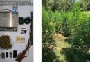 Εντοπίστηκε φυτεία δενδρυλλίων κάνναβης στην Λακωνία